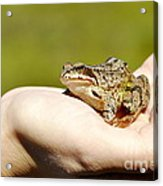 A Frog In The Hand Acrylic Print