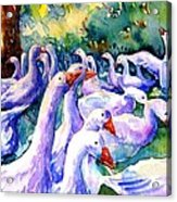 A Gaggle Of Geese Acrylic Print