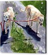 A Gentle Lead Acrylic Print by Molly Poole