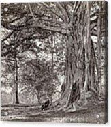 A Gentleman Sitting Beneath A Large Native Tree In British Ceylon Acrylic Print