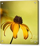 A Gift From August Acrylic Print by Lois Bryan