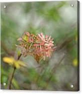 A Glimpse Of Spring To Come Acrylic Print