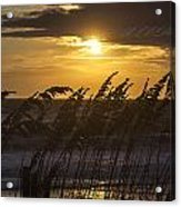 A Golden Sunrise Acrylic Print