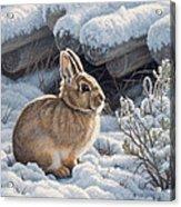 A Good Place - Bunny Acrylic Print