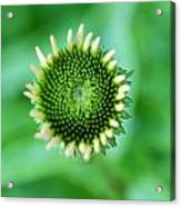 A Green World Acrylic Print
