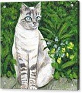 A Grey Cat At A Garden Acrylic Print