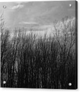 A Grey Point Of View Acrylic Print