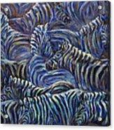 A Group Of Zebras Acrylic Print