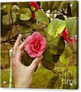 A Hand And A Camellia Acrylic Print