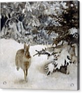 A Hare In The Snow Acrylic Print