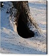 A Hollow In A Tree In Winter Acrylic Print