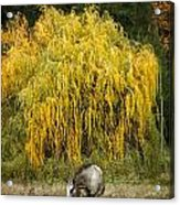 A Horse And A Willow Tree Acrylic Print