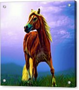 A Horse Called Sheba Acrylic Print