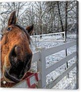 A Horse Is A Horse Acrylic Print