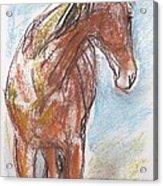 A Horse Looks Back Acrylic Print