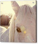A Horse's Eyes Acrylic Print