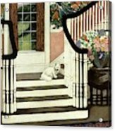 A House And Garden Cover Of A Cat On A Staircase Acrylic Print
