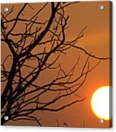 A Hummingbird Setting In A Tree At Sunset Acrylic Print