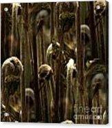 A Jungle Of Ferns Acrylic Print
