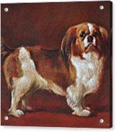A King Charles Spaniel Acrylic Print