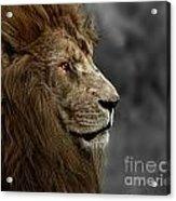A King's Look Acrylic Print