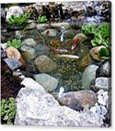 A Koi Pond For Outdoor Garden Acrylic Print