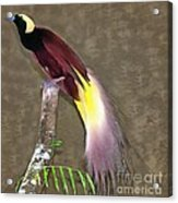A Large Bird Of Paradise Acrylic Print