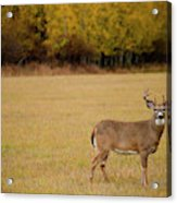 A Large Whitetail Buck Stairs Acrylic Print