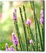 A Lavender Garden Acrylic Print