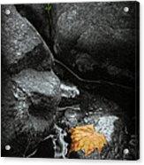 A Leaf On The Rocks Acrylic Print