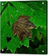 A Leaf Upon A Leaf Acrylic Print