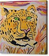 A Leopard's Gaze Acrylic Print
