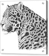 A Leopard's Watchful Eye Acrylic Print