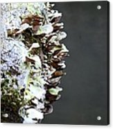 A Lichen Abstract 2013 Acrylic Print