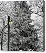 A Light Snow Acrylic Print