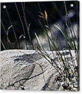 A Light Spring Breeze Acrylic Print by Gerlinde Keating - Galleria GK Keating Associates Inc