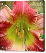 A Lily A Day Acrylic Print