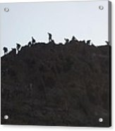 A Line Of People Walking On A Mountain Acrylic Print