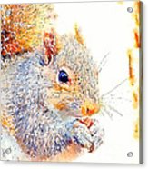 A Little Bit Squirrely Acrylic Print