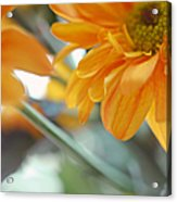 A Little Bit Sun In The Cold Time I Acrylic Print