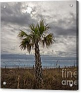 A Lonely Palm Tree Acrylic Print