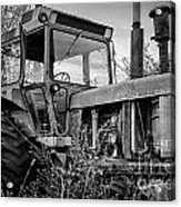 A Lonsome Deere Acrylic Print