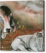 A Lot Of Bull Acrylic Print by Sandra Sengstock-Miller