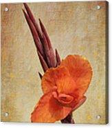 A Loving Gladiolus Acrylic Print
