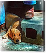 A Man And His Dog Oil Acrylic Print