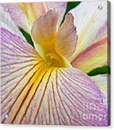 Iris  Metamorphosis Of The Iris Spring Equinox  Acrylic Print