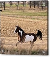 A Moment Of Freedom Acrylic Print