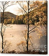 A Moment Of Gold Acrylic Print