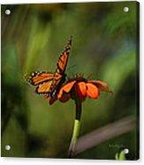 A Monarch Butterfly 4 Acrylic Print