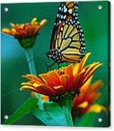 A Monarch II Acrylic Print